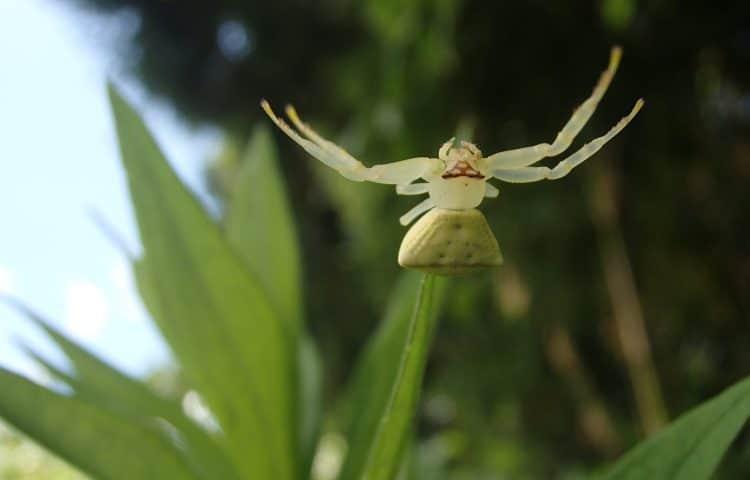 アズチグモ