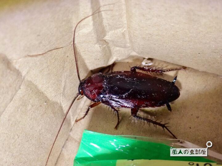 クロゴキブリは汚い